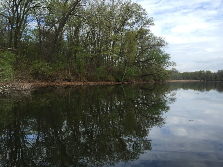 One of the many shallow coves of Kent Lake.