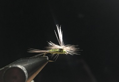 Thin-wing BWO