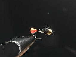 Nicholl's Firetail Nymph